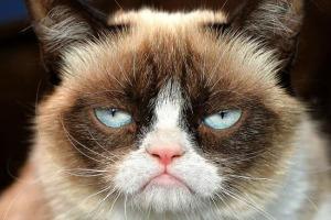 Grumpy-Cat-e1425620144940